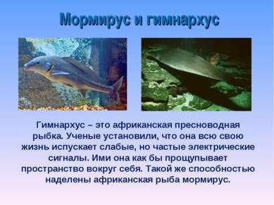 Мормирус и гимнархус Гимнархус – это африканская пресноводная рыбка. Ученые у...