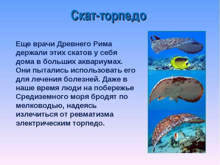 Еще врачи Древнего Рима держали этих скатов у себя дома в больших аквариумах....