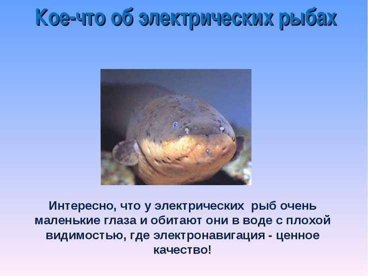 Кое-что об электрических рыбах Интересно, что у электрических рыб очень мален...