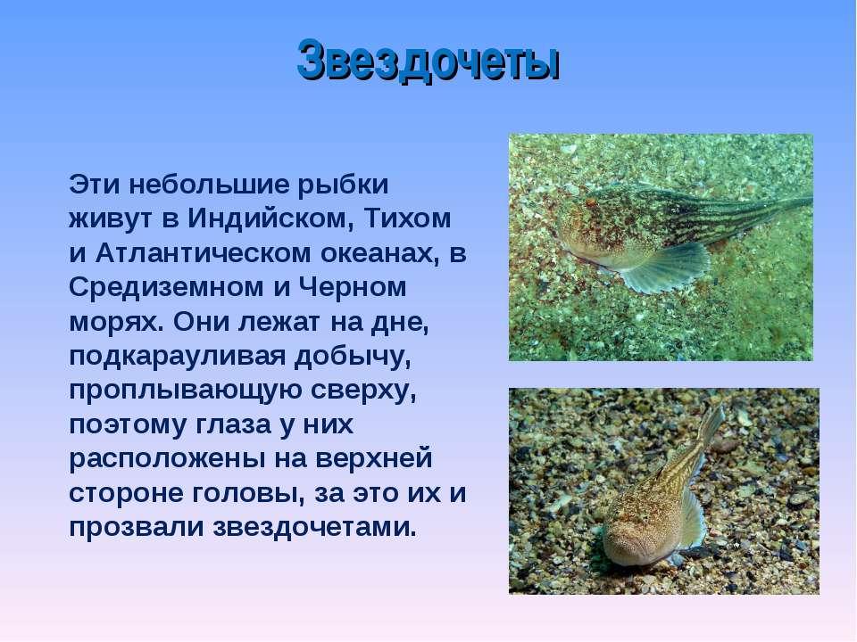 Звездочеты Эти небольшие рыбки живут в Индийском, Тихом и Атлантическом океан...