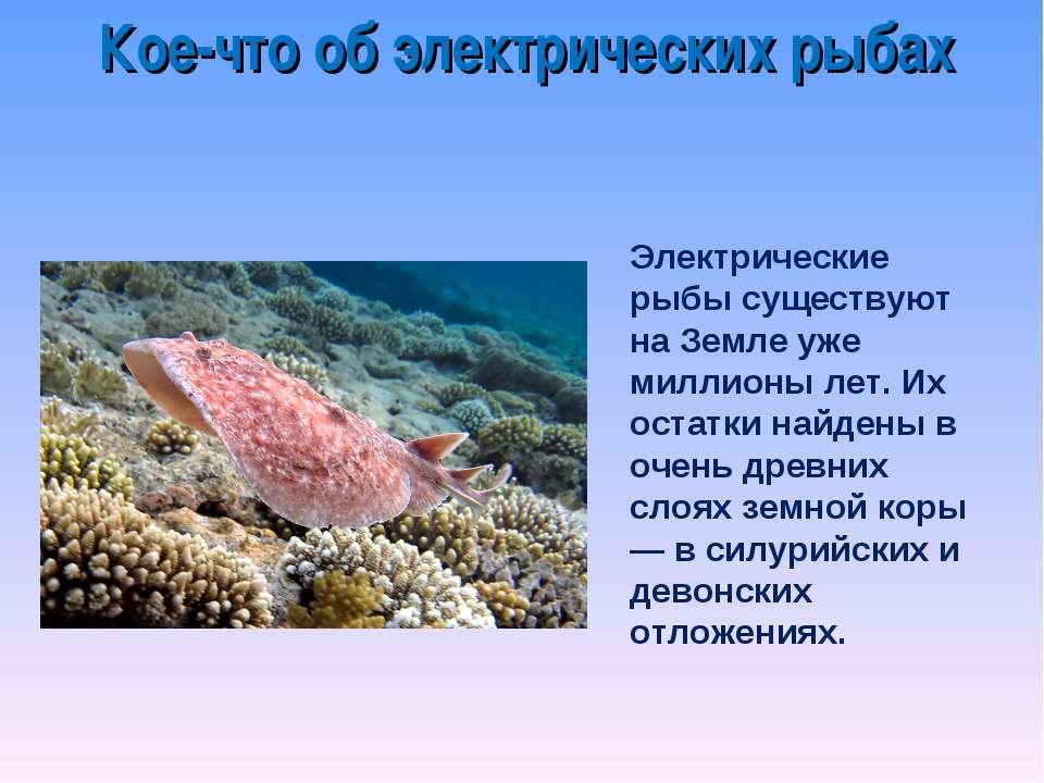 Электрические рыбы существуют на Земле уже миллионы лет. Их остатки найдены в...