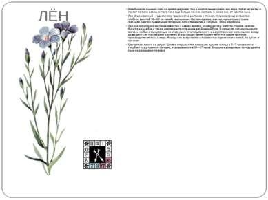 ЛЁН Незабываемо льняное поле во время цветения. Оно кажется синим-синим, как ...