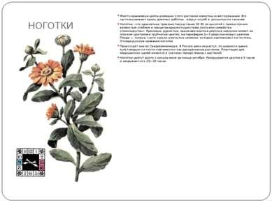 НОГОТКИ Желто-оранжевые цветы-ромашки этого растения известны всем горожанам....