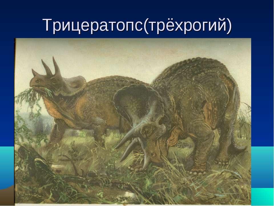 Трицератопс(трёхрогий)