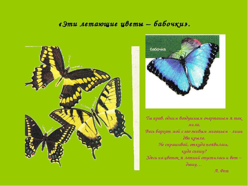 «Эти летающие цветы – бабочки». Ты прав, одним воздушным очертаньем я так мил...