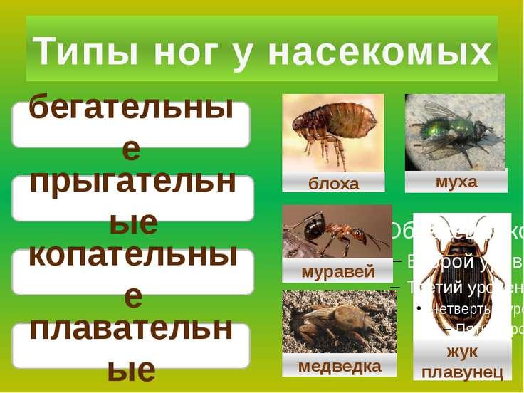 Типы ног у насекомых бегательные плавательные прыгательные копательные жук пл...