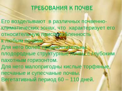 Его возделывают в различных почвенно-климатических зонах, что характеризует е...