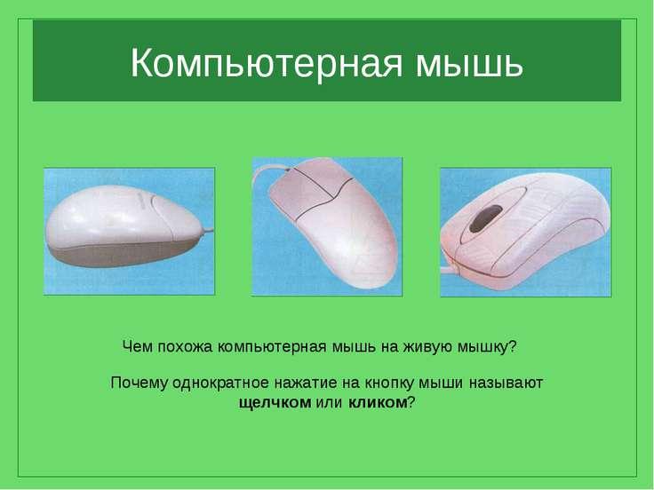 Компьютерная мышь Чем похожа компьютерная мышь на живую мышку? Почему однокра...