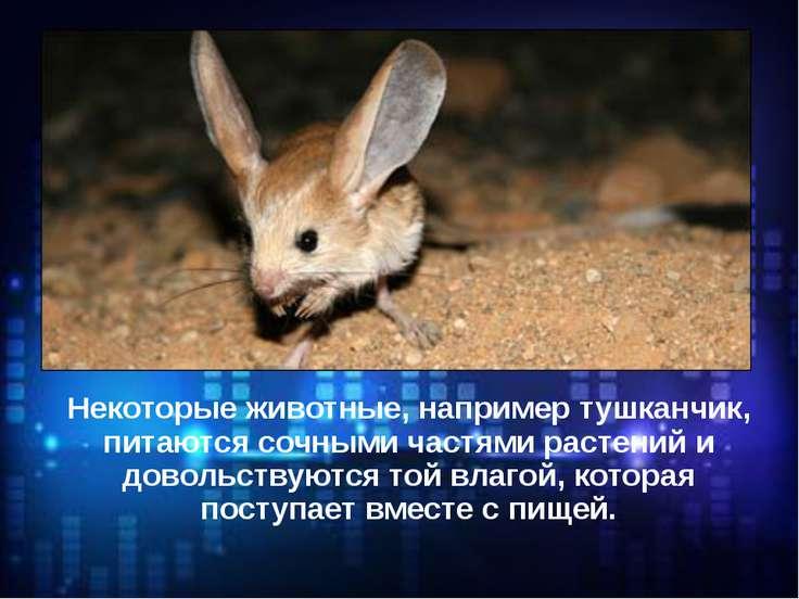 Некоторые животные, например тушканчик, питаются сочными частями растений и д...