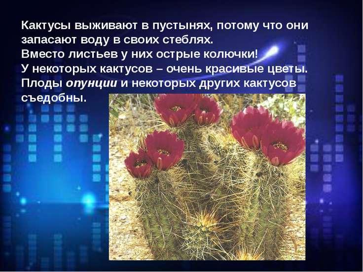 Кактусы выживают в пустынях, потому что они запасают воду в своих стеблях. Вм...