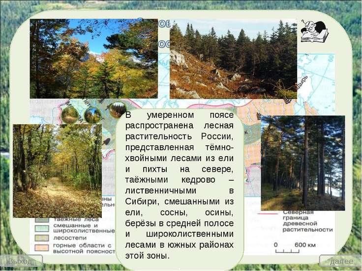 В умеренном поясе распространена лесная растительность России, представленная...