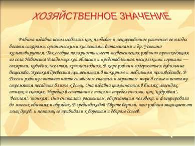 Рябина издавна использовалась как плодовое и лекарственное растение: ее плоды...