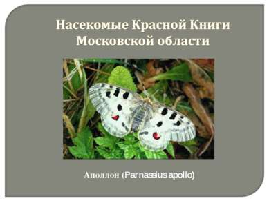 Аполлон (Parnassius apollo)
