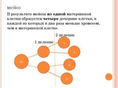 мейоз В результате мейоза из одной материнской клетки образуется четыре дочер...