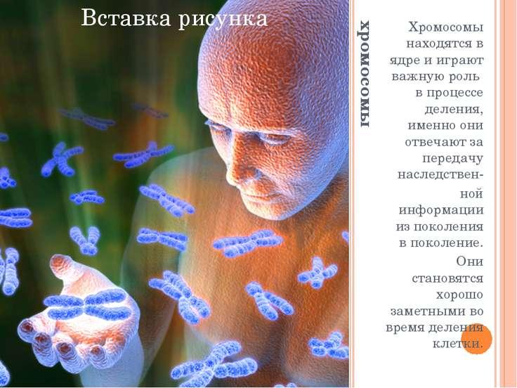хромосомы Хромосомы находятся в ядре и играют важную роль в процессе деления,...