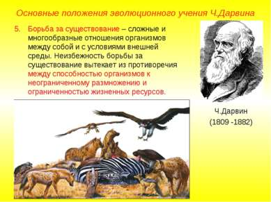 Основные положения эволюционного учения Ч.Дарвина Ч.Дарвин (1809 -1882) Борьб...
