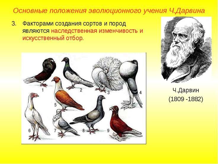 Основные положения эволюционного учения Ч.Дарвина Ч.Дарвин (1809 -1882) Факто...