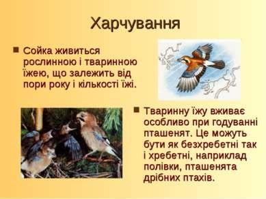 Харчування Сойка живиться рослинною і тваринною їжею, що залежить від пори ро...