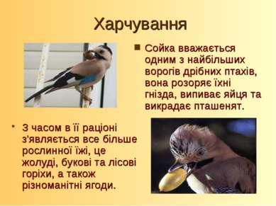 Харчування Сойка вважається одним з найбільших ворогів дрібних птахів, вона р...