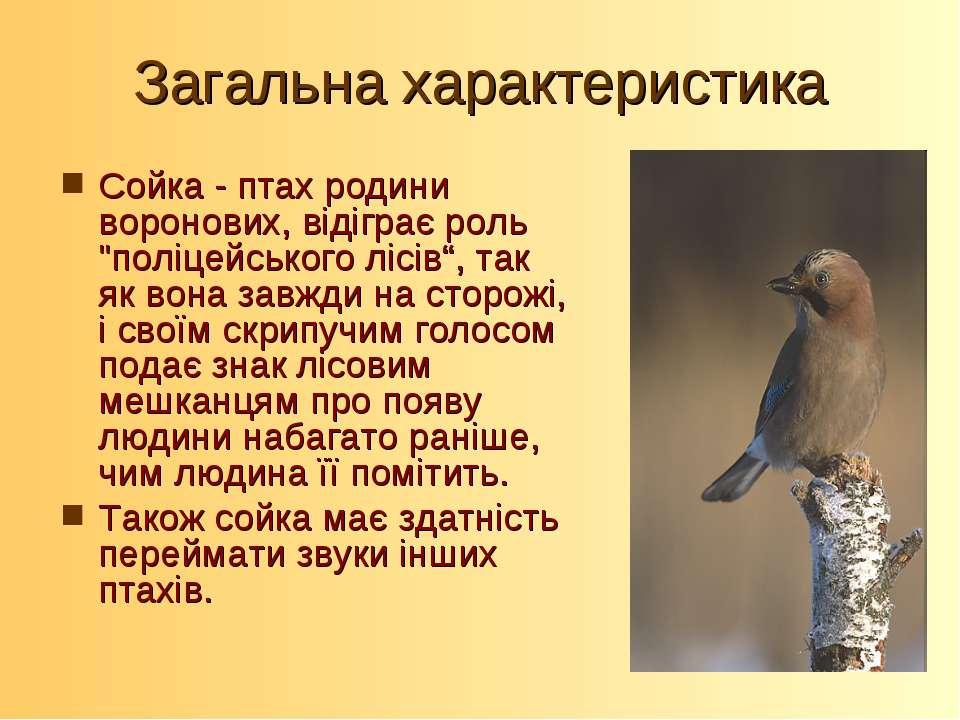 """Загальна характеристика Сойка - птах родини воронових, відіграє роль """"поліцей..."""