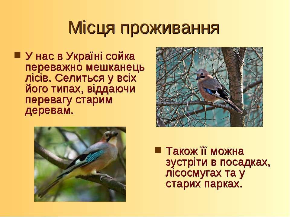 Місця проживання У нас в Україні сойка переважно мешканець лісів. Селиться у ...
