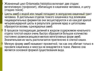 Жизненный цикл Entamoeba histolytica включает две стадии: вегетативную (трофо...