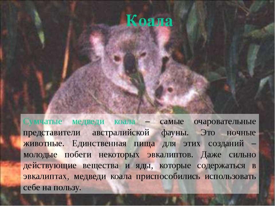 мужской необычные животные мира с описанием с картинками презентация плюс: