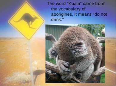 """The word """"Koala"""" came from the vocabulary of aborigines, it means """"do not dri..."""