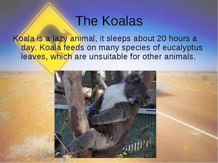 The Koalas Koala is a lazy animal, it sleeps about 20 hours a day. Koala feed...