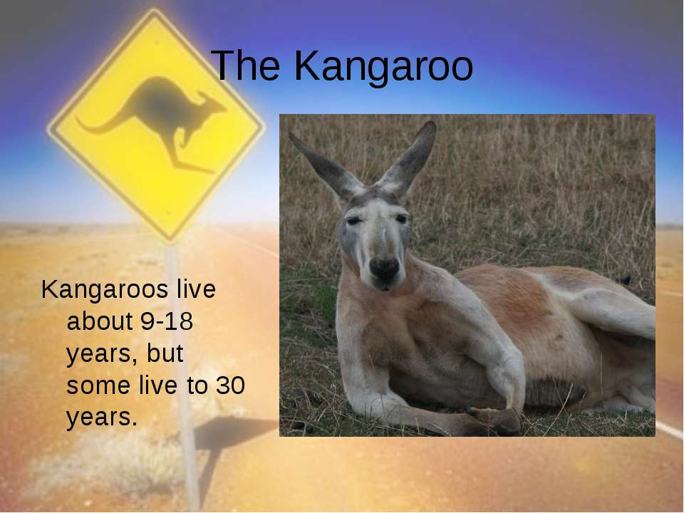The Kangaroo Kangaroos live about 9-18 years, but some live to 30 years.