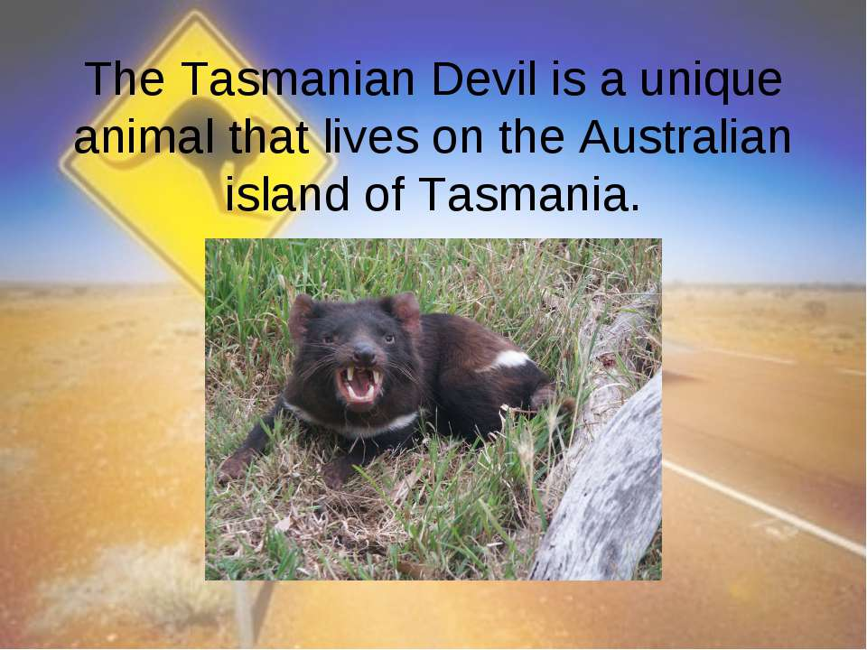 The Tasmanian Devil is a unique animal that lives on the Australian island of...