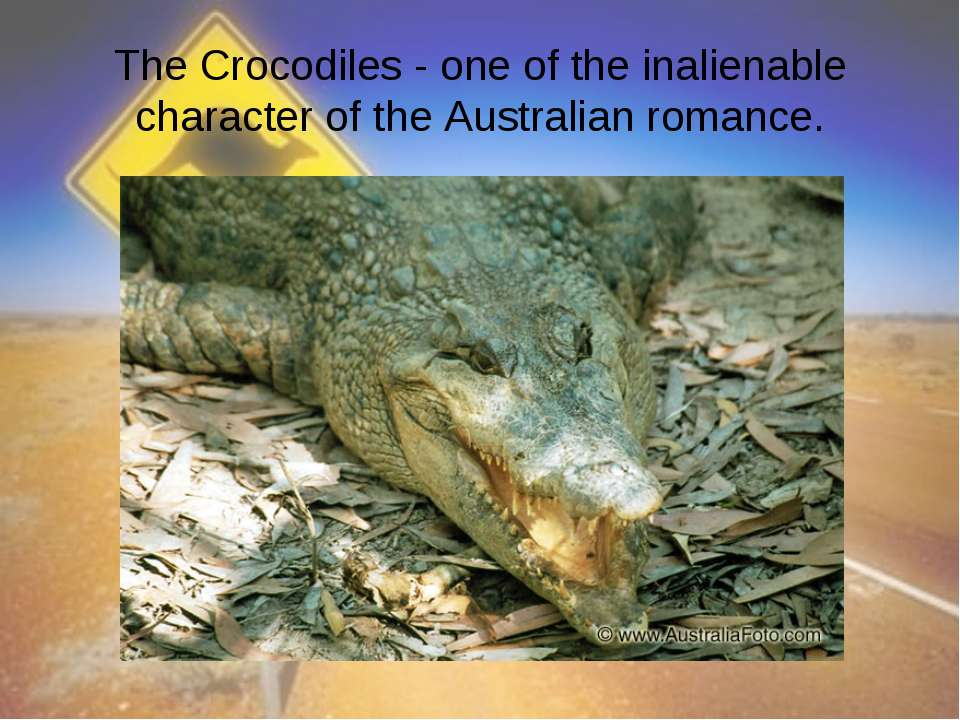 The Crocodiles - one of the inalienable character of the Australian romance.