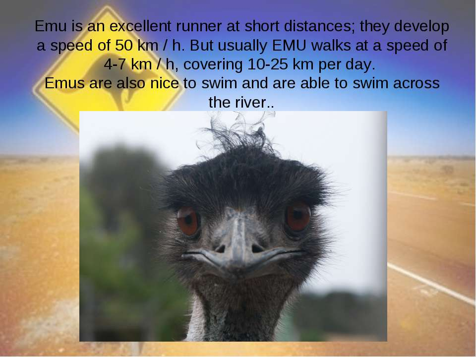 Emu is an excellent runner at short distances; they develop a speed of 50 km ...
