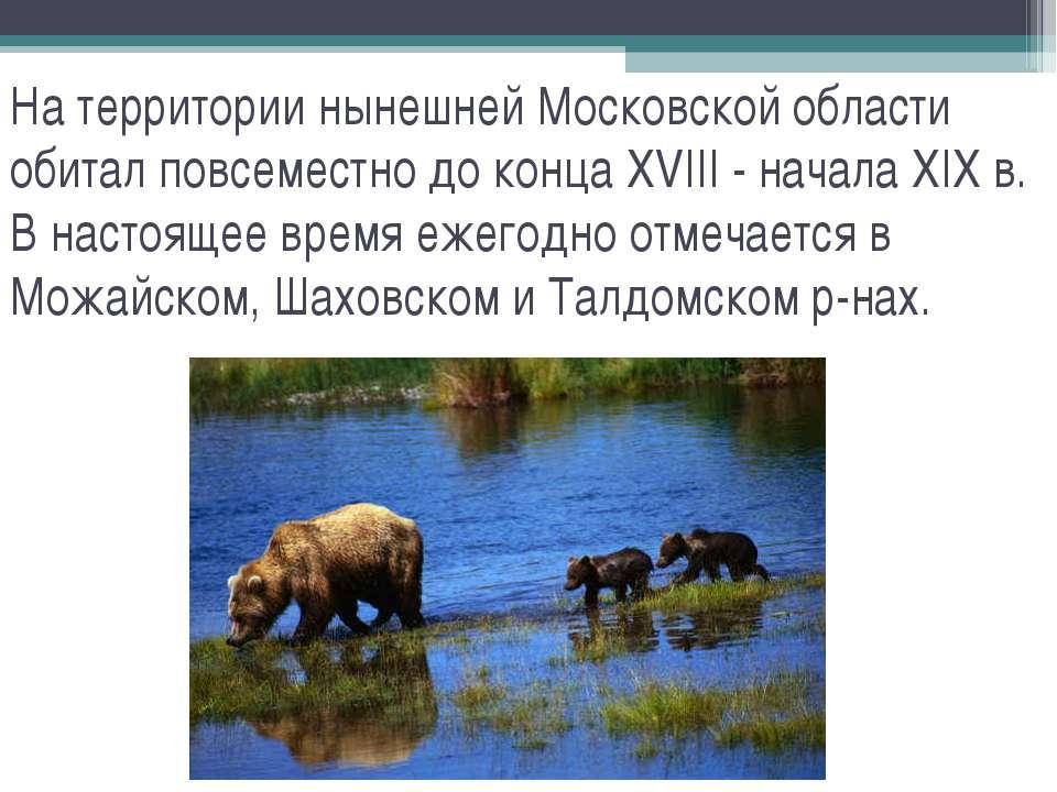 На территории нынешней Московской области обитал повсеместно до конца XVIII -...