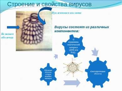Строение и свойства вирусов Нуклеиновая кислота Белковая оболочка Вирусы сост...