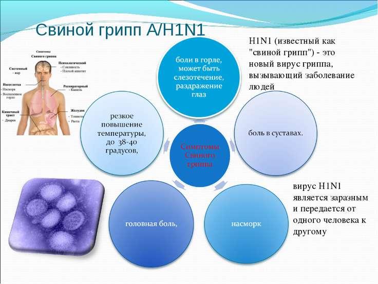"Свиной грипп А/H1N1 H1N1 (известный как ""свиной грипп"") - это новый вирус гри..."