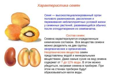 Семя — высокоспециализированный орган полового размножения, расселения и пере...