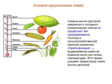 Семена многих растений умеренных и холодных климатических поясов не прорастаю...