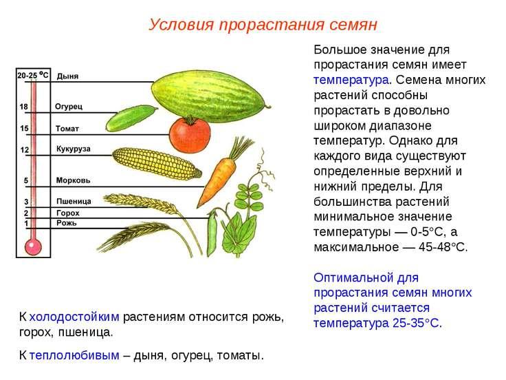 Большое значение для прорастания семян имеет температура. Семена многих расте...