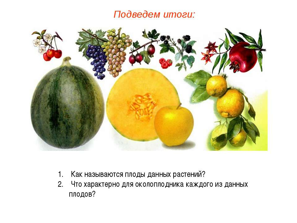Как называются плоды данных растений? Что характерно для околоплодника каждог...