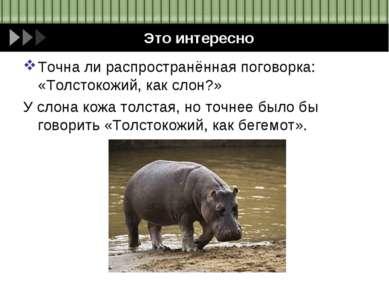 Это интересно Точна ли распространённая поговорка: «Толстокожий, как слон?» У...
