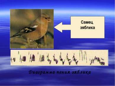 Диаграмма пения зяблика Самец зяблика