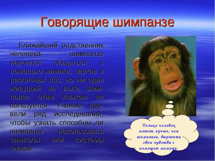 Говорящие шимпанзе Ближайший родственник человека – шимпанзе научился общатьс...