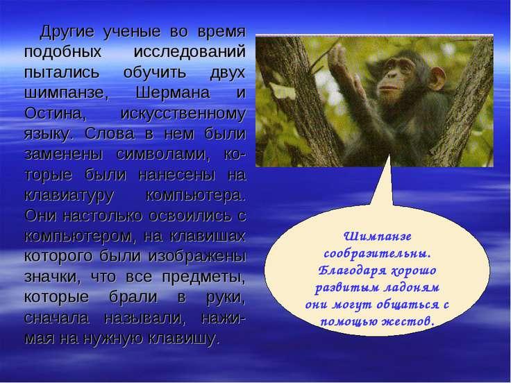 Другие ученые во время подобных исследований пытались обучить двух шимпанзе, ...
