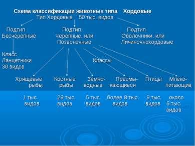 Схема классификации животных типа Хордовые Тип Хордовые 50 тыс. видов Подтип ...