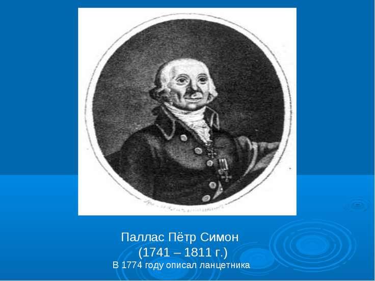 Паллас Пётр Симон (1741 – 1811 г.) В 1774 году описал ланцетника
