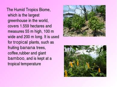 The Humid Tropics Biome, which is the largest greenhouse in the world, covers...
