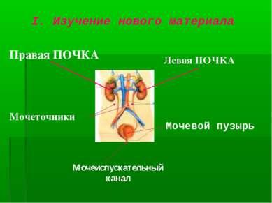 I. Изучение нового материала Правая ПОЧКА Левая ПОЧКА Мочевой пузырь Мочеточн...