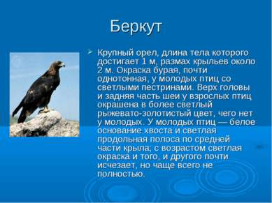 Беркут Крупный орел, длина тела которого достигает 1 м, размах крыльев около ...