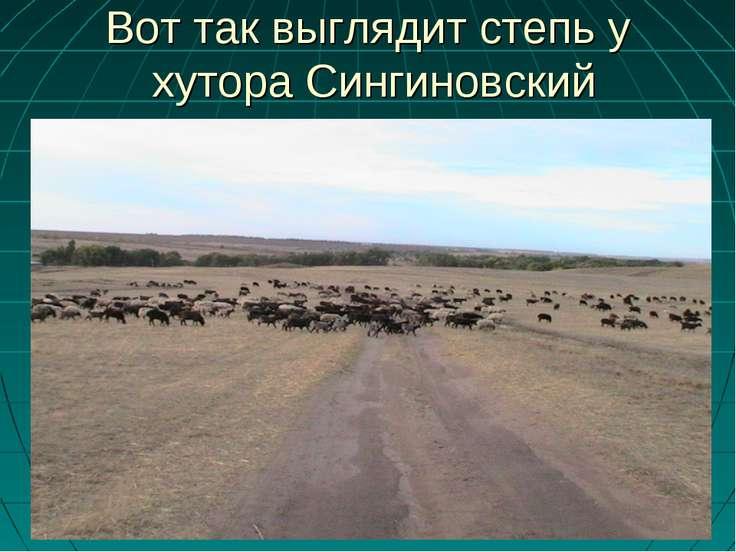 Вот так выглядит степь у хутора Сингиновский